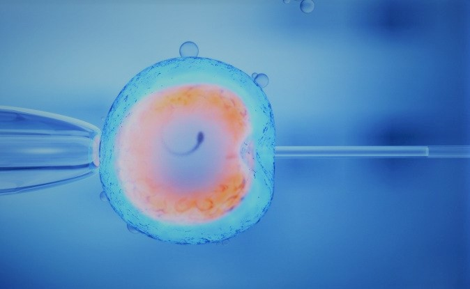 artificial embryos